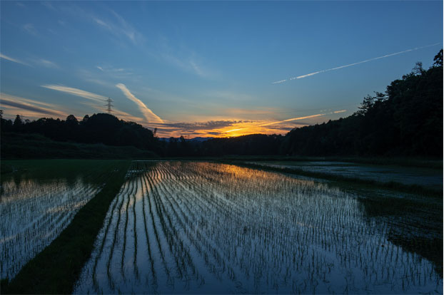 阿山の田んぼに映る朝日