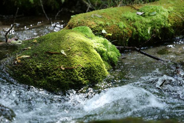 鈴鹿山系から流れる河川