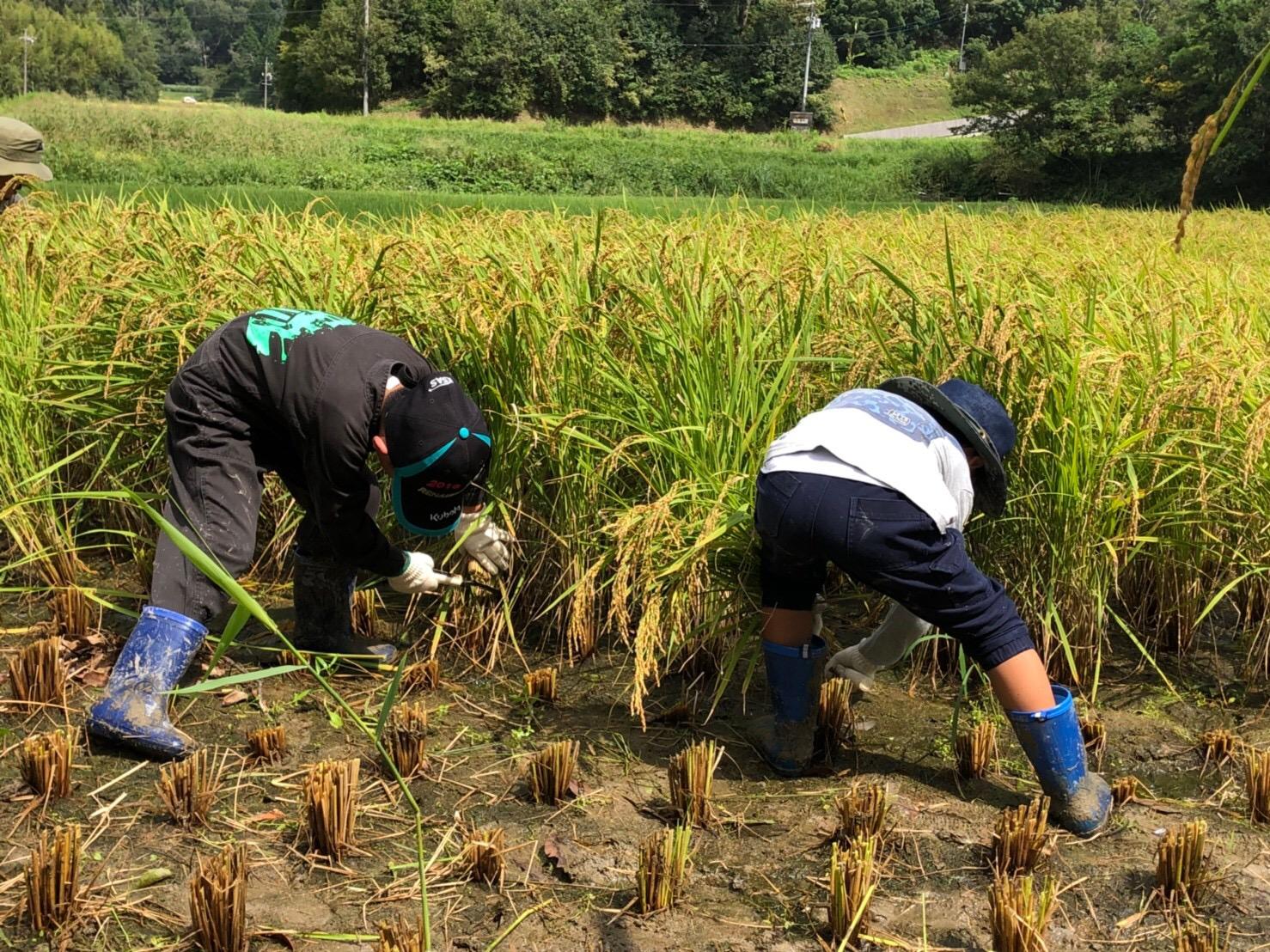 収穫祭 稲刈り体験 新米を食べつくす!